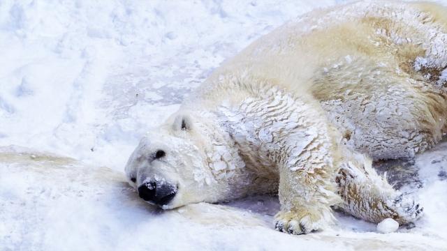 北極・南極の環境問題